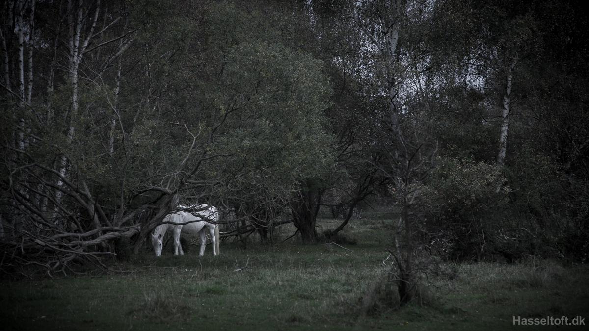 moesgaard-8076